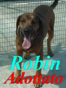ado robin