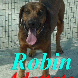 Robin Adottato!!!