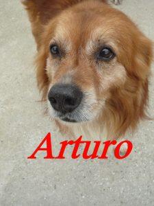 arturo5