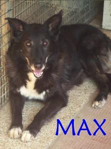 max canile