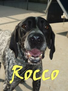 rocco5