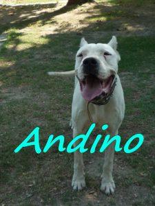 andino2-2