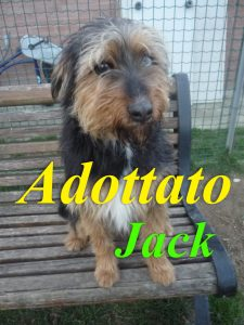 jack ado