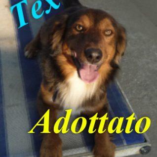 Tex adottato!!!