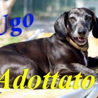 Ugo adottato!!!!!!