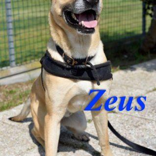 Zeus: un nome nuovo per ricominciare